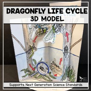 dragonfly life cycle model 3d model featured image 300x300 - Dragonfly Life Cycle Model - 3D Model
