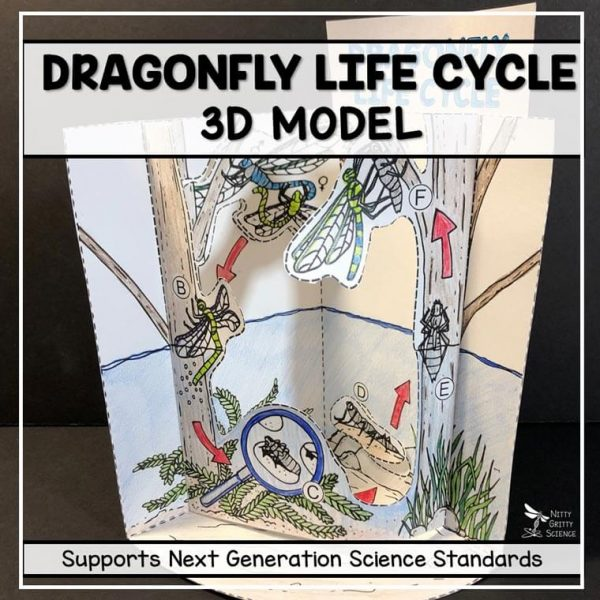 dragonfly life cycle model 3d model featured image 600x600 - Dragonfly Life Cycle Model - 3D Model