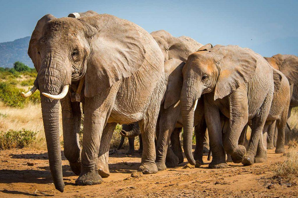 elephant 1024x683 - Section 1: Characteristics of Populations