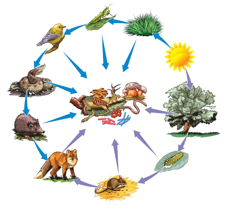 energy flow in ecosystem - Section 1: Nutrition and Energy