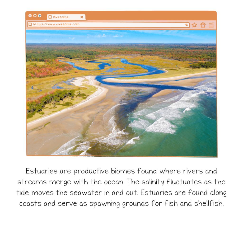 estuary 1024x1024 - Section 6: Biomes