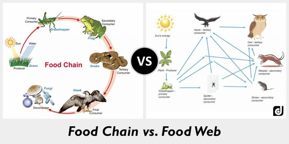 foodchainweb - Section 2: Energy Flow in Ecosystems