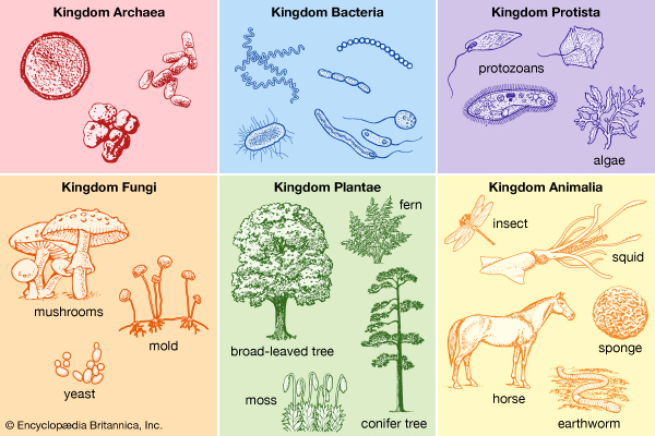 kingdoms examples - Section 5: Domains and Kingdoms