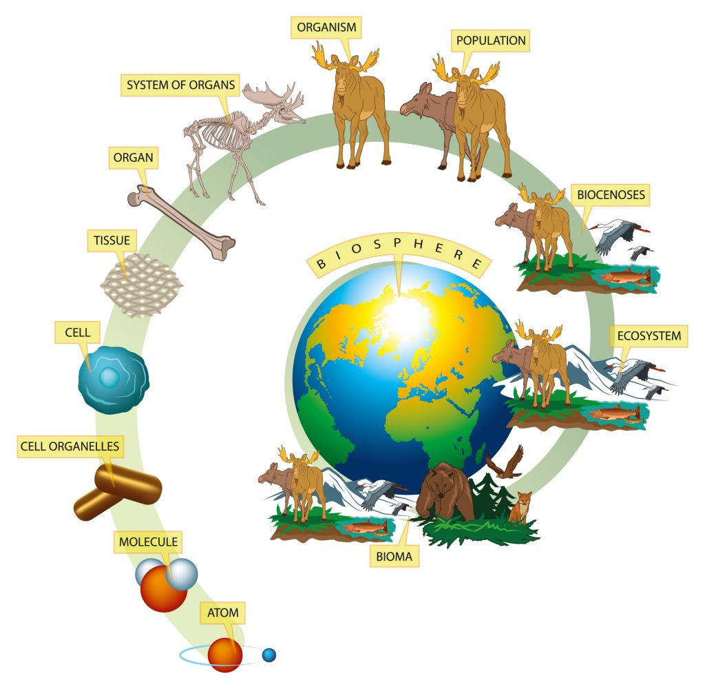 living world 1024x1000 - Section 1: The Science of Biology