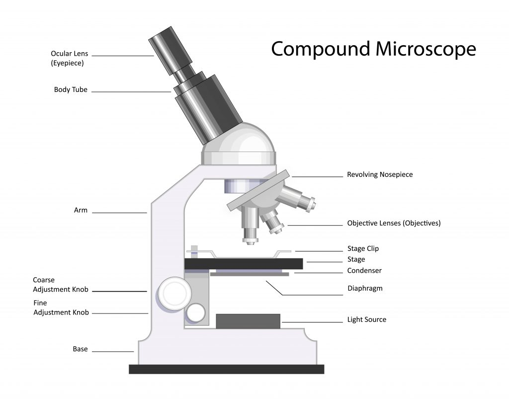 microscope 1024x805 - Section 2: Scientific Research and Tools