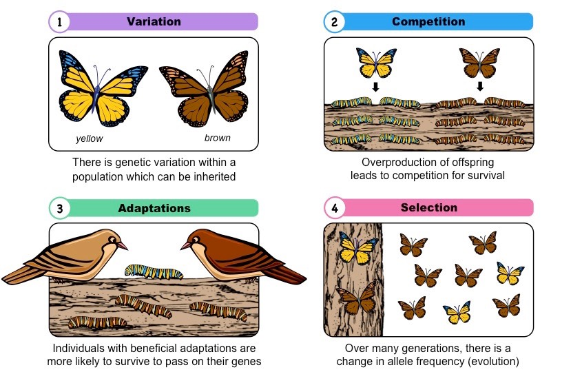 naturalselection - Section 1: Darwin's Theory of Evolution