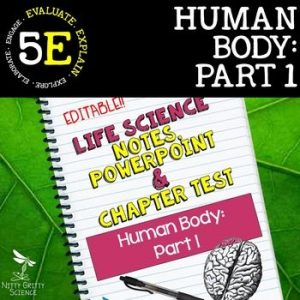 original 2399151 1 300x300 - Human Body - Part 1: Life Science Notes, PowerPoint & Test ~ EDITABLE