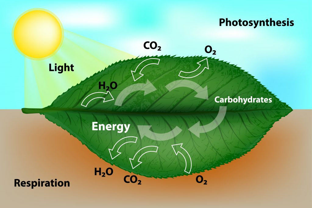 photcell 1024x683 - Section 2: Cellular Respiration