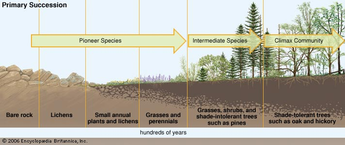 primary succession - Section 5: Ecological Succession