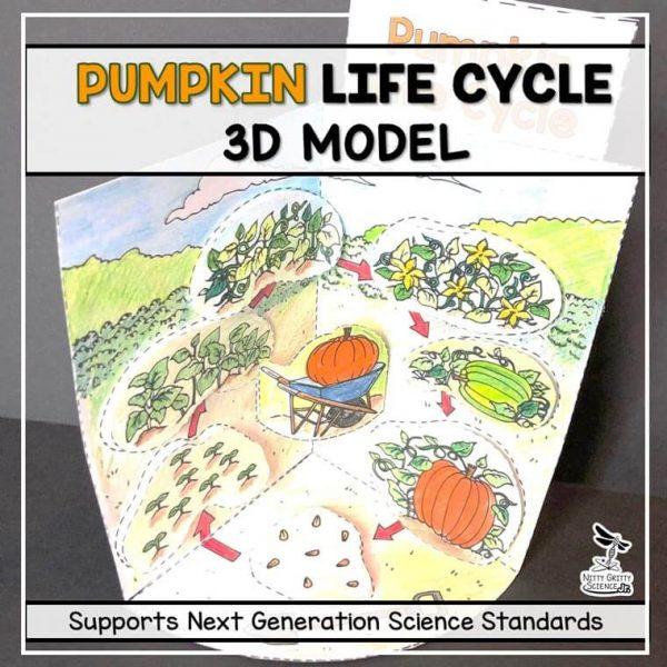 pumpkin life cycle model 3d model october science featured image 600x600 - Pumpkin Life Cycle Model - 3D Model - October Science