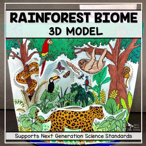 rainforest biome model 3d model biome projec featured image 600x600 - Rainforest Biome Model - 3D Model - Biome Project