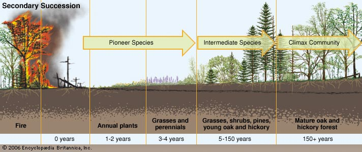 secondary succession - Section 5: Ecological Succession