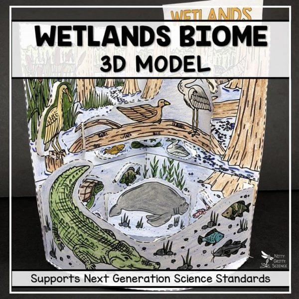 wetland biome model 3d model biome project featured image 600x600 - Wetland Biome Model - 3D Model - Biome Project